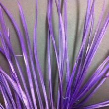Purple Goose Biot Feathers